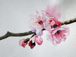 الهه نیک خواه | بهارانه | گالری کبیری